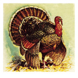 Christmas Turkey Giclee Print by English School