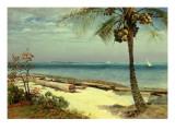 Tropical Coast Giclée-tryk af Albert Bierstadt