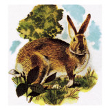 Hare Giclee Print by English School