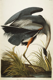 Grand héron bleu Reproduction procédé giclée par Audubon