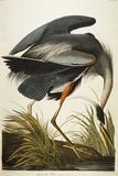 Grand héron bleu Reproduction procédé giclée par  Audubon