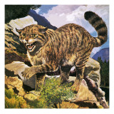 Wildcat Giclee Print by G. W Backhouse