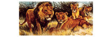 A Pride of Lions Giclee Print by  English School