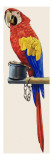 Parrot Giclee Print by  English School