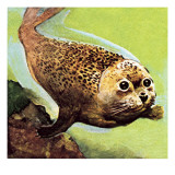 The Common Seal Giclee Print by English School 