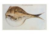 Puffer Giclee Print by John White