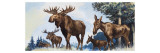 Moose Family Giclee Print by G. W Backhouse