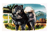 Chow-Chow Giclee Print by English School