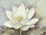White Elegance I Prints by Danielle Nengerman