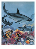 Sharks Giclee Print by G. W Backhouse