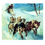 The Canadian Husky Giclee Print by  McConnell