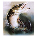 Pike Leaping Giclee Print by  English School
