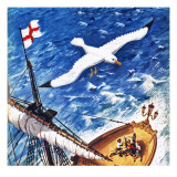 Albatross Giclee Print by English School