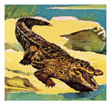 Crocodile Giclee Print by English School 