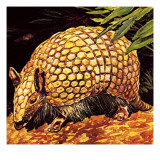 Armadillo Giclee Print by  English School