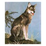 Loups Reproduction procédé giclée par  English School