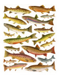 Trout Giclee Print by  English School