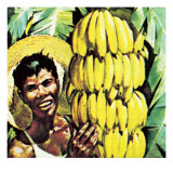 Bananas Giclee Print by English School