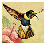 Humming Bird Giclee Print by English School