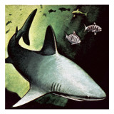 Killer Shark Giclee Print by  English School