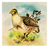 Partridge Giclee Print by English School 