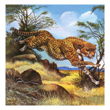 Cheetah Running Giclee Print by G. W Backhouse