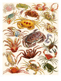 Crabs Giclee Print by English School 
