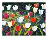 Tulips Festival Prints by P. Sonia