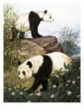 Pandas, 1965 Giclee Print by Arthur Oxenham