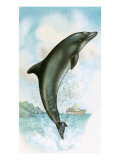 Jumping Dolphin Giclee Print by  English School