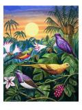 Tropical Sunbirds Premium Giclee Print by John Chalkley