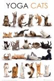 Chats yoga Poster
