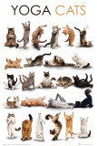 Yoga Katzen Poster