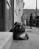 Lazy Bulldog at Camden Town Prints by John Gay