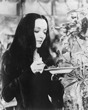 Carolyn Jones - The Addams Family Photo