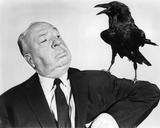 Alfred Hitchcock, Fuglene, på engelsk Photo