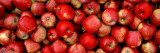 Close-up of Red Apples Decalcomania da muro di Panoramic Images,