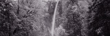 Winter, Bridal Veil Falls, California, USA Wall Decal by  Panoramic Images