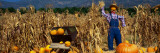 Pumpkin Patch at Bocalli Ranch, California, USA Wall Decal by  Panoramic Images