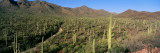 Saguaro National Park, Arizona, USA Wall Decal by Panoramic Images