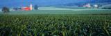 Corn, Kishacoquillas Valley, Pennsylvania, USA Wall Decal by  Panoramic Images