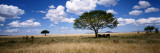 Elephants, Kenya, Africa Wall Decal by  Panoramic Images
