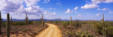 Road, Saguaro National Park, Arizona, USA Autocollant mural par  Panoramic Images