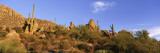 Saguaro Cactus, Sonoran Desert, Arizona, United States Wall Decal by  Panoramic Images