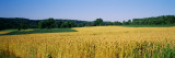 Field Crop, Maryland, USA Wallstickers af Panoramic Images,