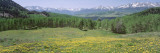 Flowering Plants in a Field, Mt. Wilson, San Miguel Range, Telluride, Colorado, USA Wall Decal by  Panoramic Images