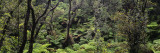 High Angle View of Trees in a Rainforest, Hawaii Volcanoes National Park, Hawaii, USA Wall Decal by  Panoramic Images