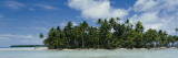 Palm Trees on an Island, Rangiroa, French Polynesia Wall Decal by  Panoramic Images