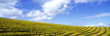 Mustard Fields, Napa Valley, California, USA Wall Decal by  Panoramic Images