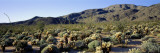 Coyote Canyon, Anza Borrego Desert State Park, California, USA Wall Decal by  Panoramic Images